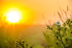 På en grön gräsmatta i den tidiga dimmiga morgonen arkivfoto