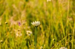 På en grön gräsmatta i den tidiga dimmiga morgonen royaltyfria bilder