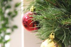 på en gul abstrakt bakgrund är en vit hylla med en grön blomma i en kruka barrträds- gröna filialer av julgranen, royaltyfri fotografi