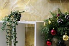 på en gul bakgrund av abstrakt begrepp, en vit hylla med en grön blomma i en kruka och barrträds- gröna filialer av julgranen arkivfoto