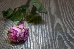 På en träbakgrund är en vissnad ros arkivfoto