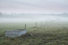 På engelska bygd för dimmig landscsape med boskapmatning t Royaltyfri Bild