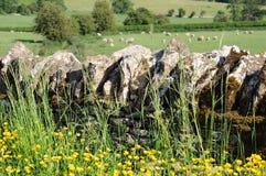 På engelska bygd för stenvägg av Cotswolds Arkivfoto