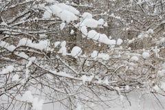 På engelska trädgård för vinter, Munich Arkivfoto