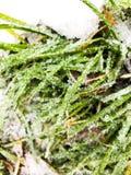 Is på ett gräs fotografering för bildbyråer