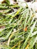 Is på ett gräs arkivbild