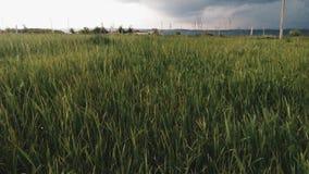 På fältet framme av hällregn Arkivbilder