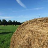 På fältet skördade runda baler av sugrör som ligger på en gräsplan mea Royaltyfri Foto