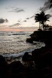 På ferie till Hawaii Royaltyfria Foton