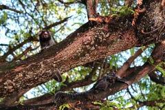 På filialerna av ett träd Arkivbild