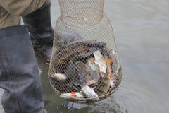 På fiske Arkivfoton