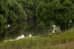 På flodbanken i de ogenomträngliga busksnåren är en svartav-ro Arkivbild