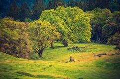 På Forest Edge royaltyfri fotografi