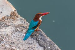 På gränsen med Pakistan det fantastiska djurlivet av Rajasthan fotografering för bildbyråer