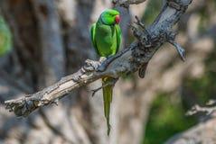 På gränsen med Pakistan det fantastiska djurlivet av Rajasthan royaltyfria foton