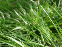 På gräset Arkivfoto