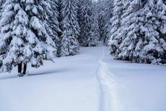 På gräsmattan som täckas med vit snö finns det, en trampad bana som leder till den täta skogen Arkivbild