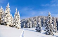 På gräsmattan som täcktes med snö som, de trevliga träden står, hällde med snöflingor i frostig vinterdag fotografering för bildbyråer