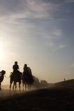 På gryning kamel i desrten Arkivfoton