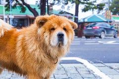 På hunden och byggnaderna för gatakäkkäk Loppfoto 2018 december royaltyfria bilder