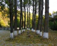 På ingången av den Ramet kloster Rumänien Royaltyfria Foton