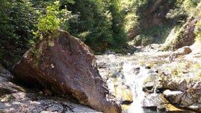 På kanten av The Creek royaltyfria foton