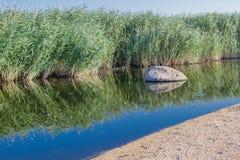 På kanten av ett sankt område som är bevuxen med gräs, i vattnet, är en sten arkivfoton