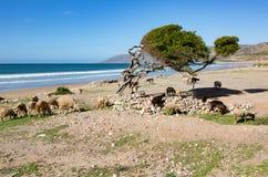 På kanten av havet nära Taghazout Marocko Arkivbilder