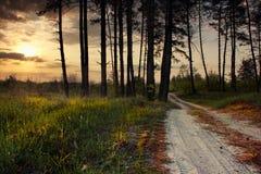 På kanten av skogen Royaltyfria Bilder