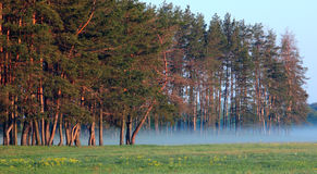 På kanten av skogen Arkivfoto