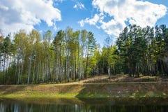 På kusten av sjön finns det en härlig skog fotografering för bildbyråer