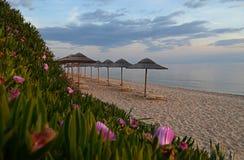 På kusterna av det Aegean havet, stranden med gul sand på som där är sugrörslags solskydd och härliga rosa blommor royaltyfri bild