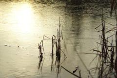 Is på laken Arkivfoto