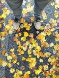 på leavesna Arkivbild