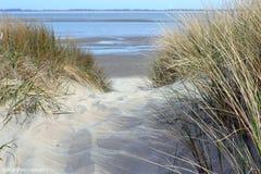 På min väg till stranden - Nederländerna Arkivbilder