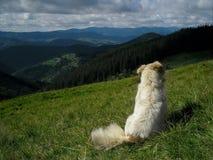 På naturen med hunden arkivfoton