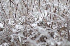 Is på pinnar Arkivfoto