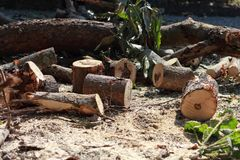 På platsen som klipps ner träd Arkivbilder