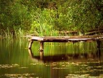 På skogfloden Arkivbild