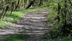På skogvägen faller skuggorna av träd stock video