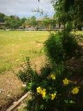 På skolan Royaltyfri Foto