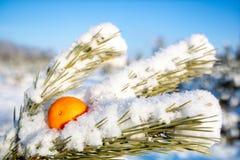 På snö-täckt sörja filialen i skogen sätter orange frukt, garnering arkivfoton