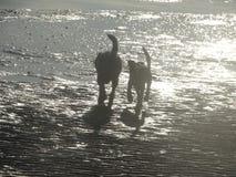På stranden Arkivbilder