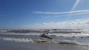 På stranden Royaltyfri Bild