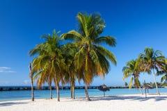På stranden Playa Giron, Kuba Fotografering för Bildbyråer