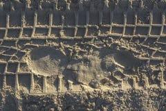 På strandfotspåren Arkivbilder