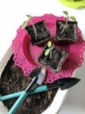 På tabellen är en planta i torvbehållare Fotografering för Bildbyråer