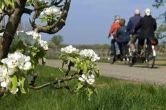 På tandemcykeln som cyklar filialen för äldre folk och blomning Arkivbilder