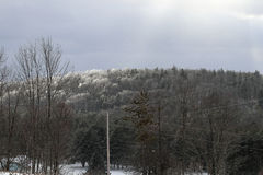 Is på treesna Royaltyfri Bild