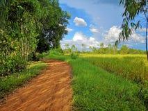 på vägarna i de gröna risfälten och den blåa himlen arkivfoto